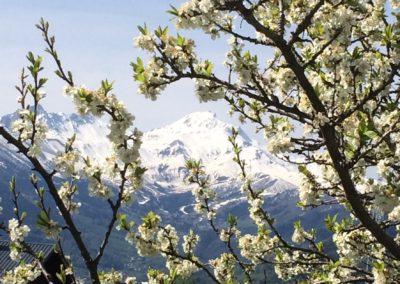 Revitalise in the spring