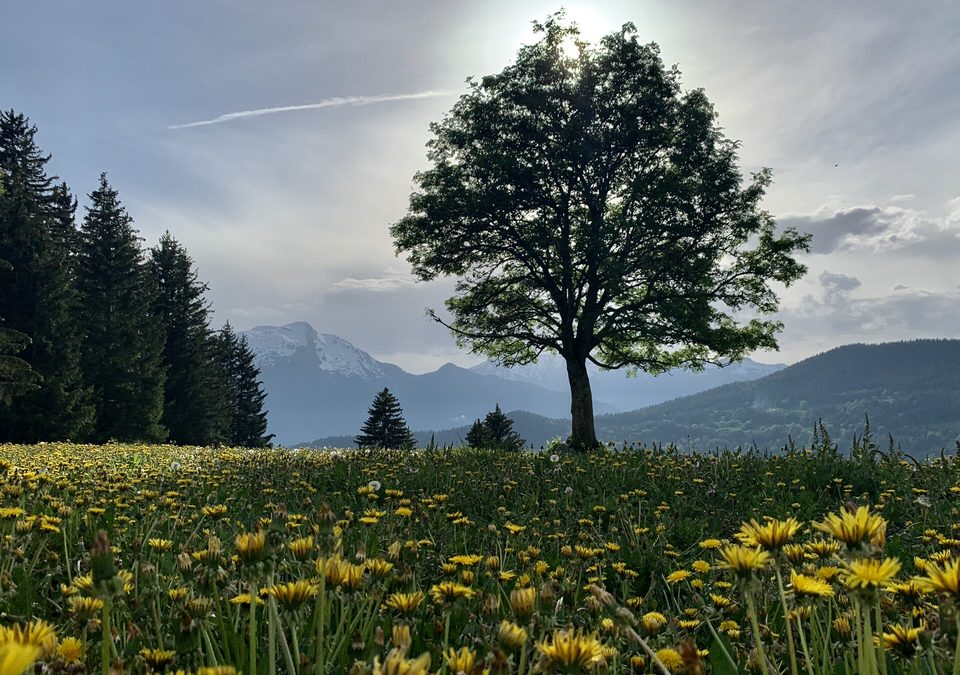 Cycling in Savoie 2020